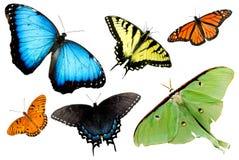 Farfalle e lepidotteri su priorità bassa bianca Fotografia Stock Libera da Diritti