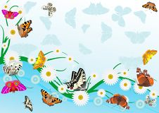 Farfalle e margherite Fotografia Stock