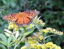 Farfalle e vespe Immagine Stock