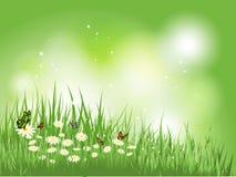 Farfalle in erba con le margherite illustrazione vettoriale