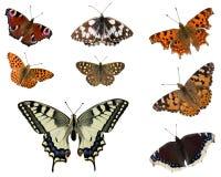 Farfalle europee Immagine Stock