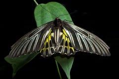 Farfalle intorno al mondo immagine stock libera da diritti