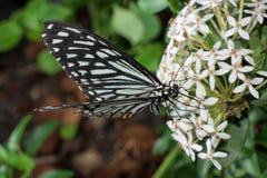 Farfalle intorno al mondo fotografia stock libera da diritti