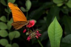 Farfalle intorno al mondo immagini stock