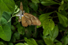 Farfalle intorno al mondo Immagini Stock Libere da Diritti