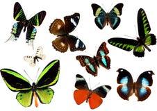 Farfalle isolate Immagini Stock