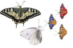 Farfalle isolate illustrazione di stock