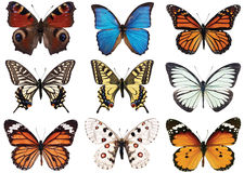 Farfalle isolate su bianco Fotografia Stock Libera da Diritti