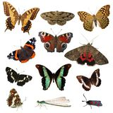 Farfalle isolate su bianco Fotografia Stock