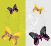 Farfalle luminose sui precedenti decorativi Immagini Stock