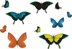 Farfalle multicolori. Fotografia Stock