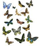 Farfalle multicolori su una priorità bassa bianca Immagini Stock