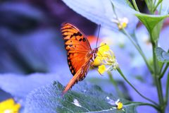 Farfalle nel giardino delle farfalle Immagini Stock