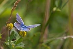 Farfalle nel legno Immagini Stock Libere da Diritti