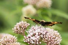 Farfalle nel legno Fotografie Stock Libere da Diritti