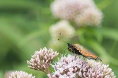 Farfalle nel legno Immagini Stock