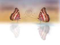 Farfalle nell'amore Fotografia Stock Libera da Diritti