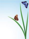 Farfalle nell'erba Fotografia Stock