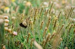 Farfalle in sabbie di Perran fotografia stock