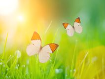 Farfalle sopra erba Immagine Stock Libera da Diritti