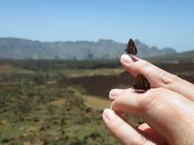Farfalle su una mano immagine stock libera da diritti