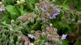 Farfalle sull'erba video d archivio