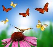 Farfalle sulla priorità bassa della sfuocatura fotografia stock