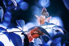 Farfalle, farfalle sulle farfalle dei ramoscelli, farfalle sui ramoscelli fotografia stock