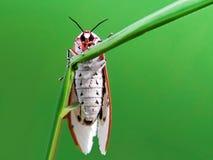 farfalle sulle foglie con un fondo verde fotografie stock libere da diritti
