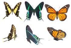 Farfalle tropicali messe Fotografia Stock Libera da Diritti