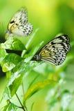 Farfalle in una pianta Immagini Stock Libere da Diritti