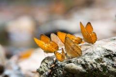 Farfalle variopinte Fotografie Stock Libere da Diritti