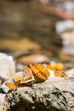 Farfalle variopinte Immagine Stock