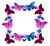 Farfalle variopinte di volo di vettore Fotografia Stock