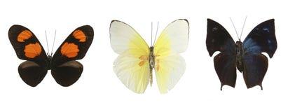 Farfalle variopinte sopra una priorità bassa bianca Fotografia Stock Libera da Diritti