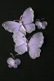 Farfalle viola Immagine Stock