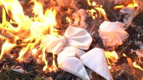 Farfallino bianco bruciante su terra stock footage
