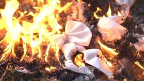 Farfallino bianco bruciante su terra archivi video