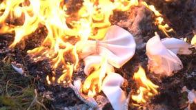 Farfallino bianco bruciante su terra video d archivio
