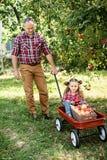 Farfar med sondottern med Apple i den Apple fruktträdgården Arkivbilder