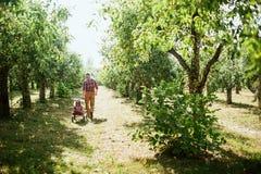 Farfar med sondottern med Apple i den Apple fruktträdgården Arkivbild