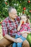 Farfar med sondottern med Apple i den Apple fruktträdgården Royaltyfri Bild