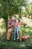 Farfar med sondottern med Apple i den Apple fruktträdgården Arkivfoto