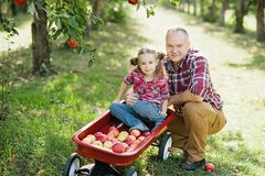 Farfar med sondottern med Apple i den Apple fruktträdgården Royaltyfri Fotografi