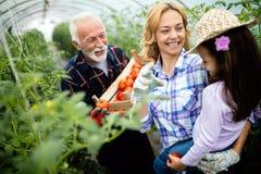 Farfar som v?xer organiska gr?nsaker med barnbarn och familjen p? lantg?rden royaltyfri bild