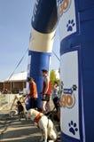 Fargo maratonu psa rasa zdjęcie stock