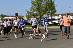 Fargo Marathon dog race called the FURGO. FARGO, NORTH DAKOTA-May 15, 2018: Dogs and trainers/owners participate in the Furgo Dog Race which is underway at the Royalty Free Stock Image