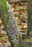 Faries sätter på en hätta svampar Royaltyfri Foto