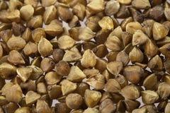 Farina di grano saraceno Fotografia Stock Libera da Diritti
