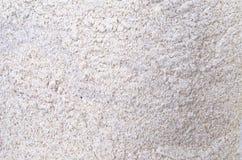 Farina di grano saraceno Fotografia Stock
